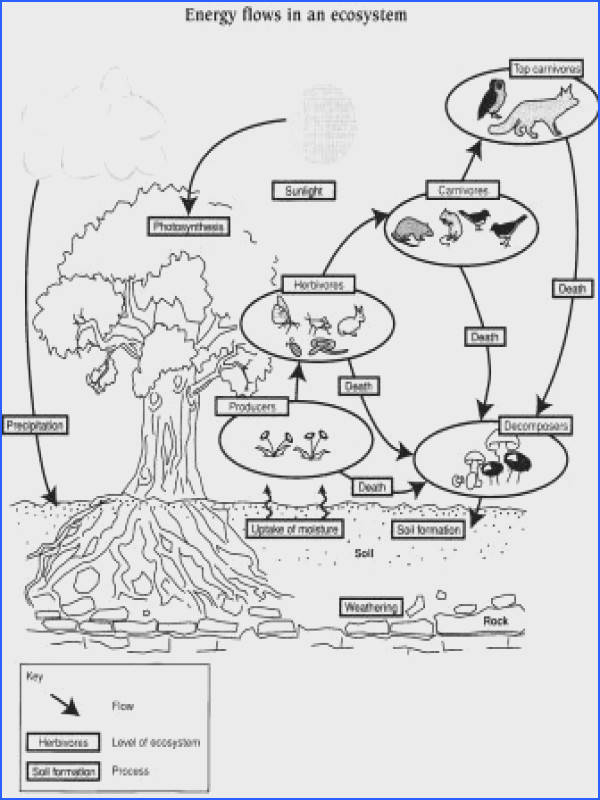Energy In Ecosystems Worksheet Worksheets For All Download And