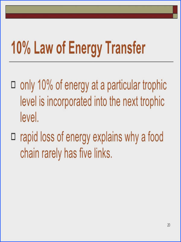 20 Law of Energy Transfer