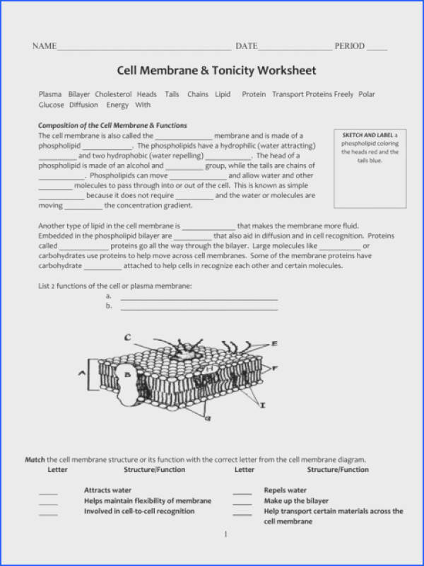 Cell Membrane Coloring Worksheet Answer Key Free Color of Love