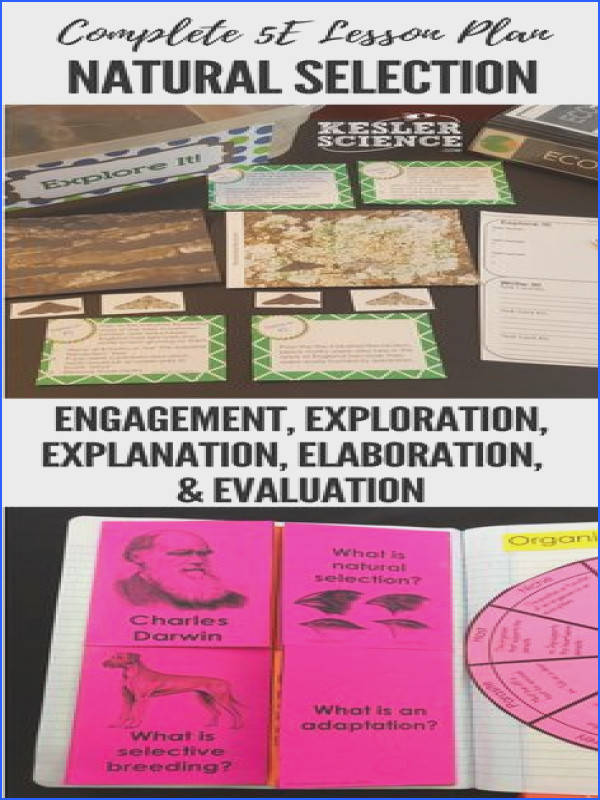 Evolution PowerPoint Handouts INB Task Cards Word Wall