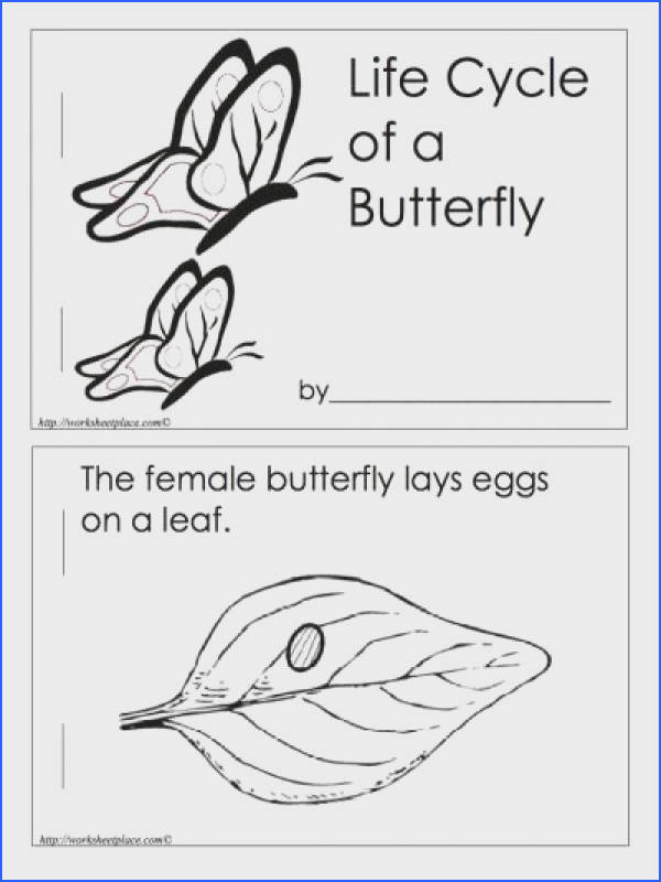 Life Cycle of a Butterfly Book