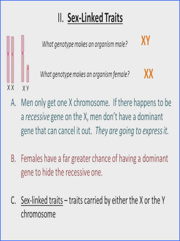 Linked Traits What genotype makes an organism male