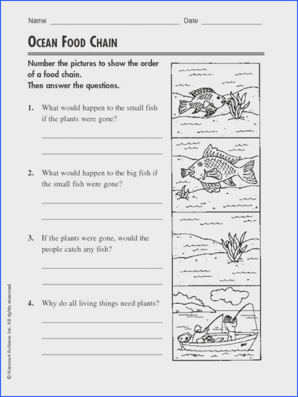 Food webs and food chains worksheet mychaume food chain worksheet 4th grade ibookread Download