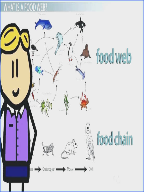 food chain worksheet to her with the food web of the arctic ocean video lesson transcript cool