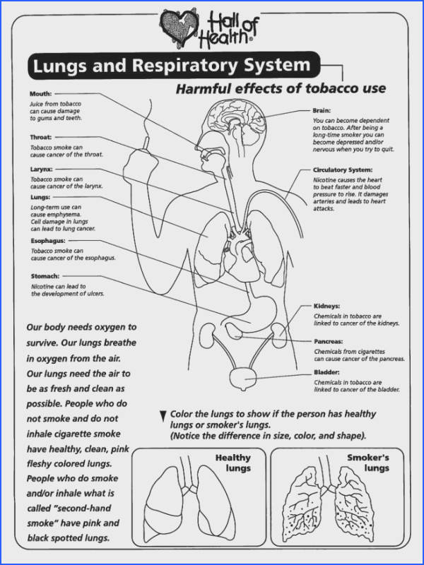 free lung worksheets