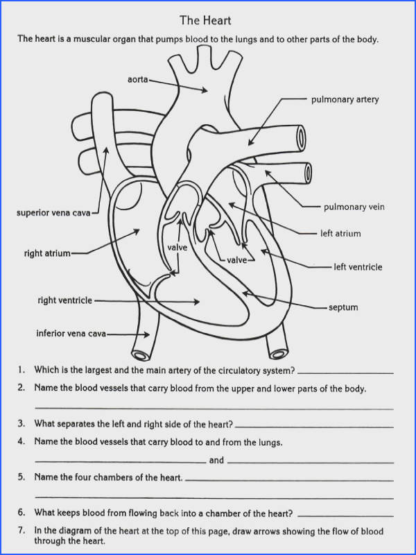 free parts of the heart worksheets