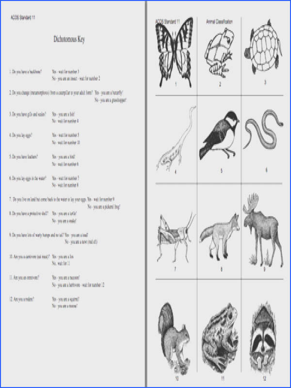 Here s a dichotomous key activity on animals