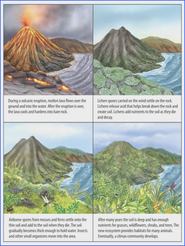How Ecosystems Change Ecological Succession