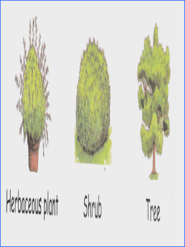 how non flowering plants reproduce using spores Learning science in English Pinterest