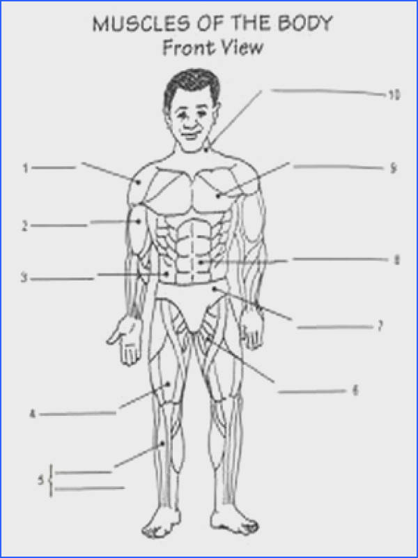 How The Body Works The Muscles Worksheet Answers Worksheets for all Download and Worksheets