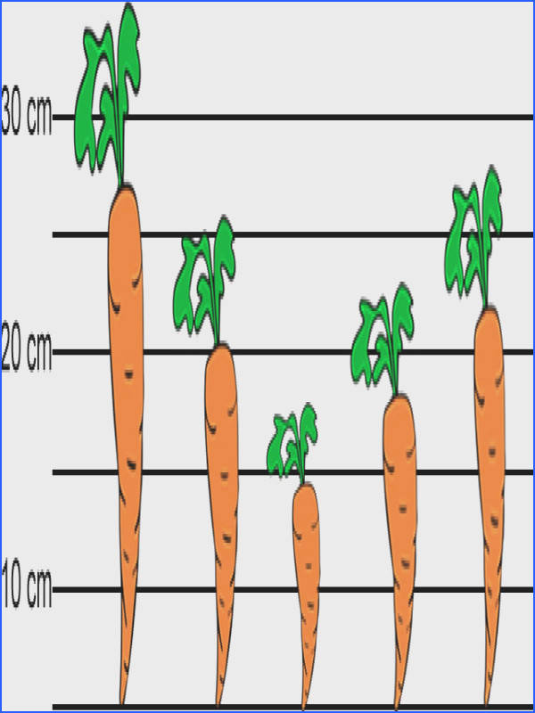 carrot standard deviation