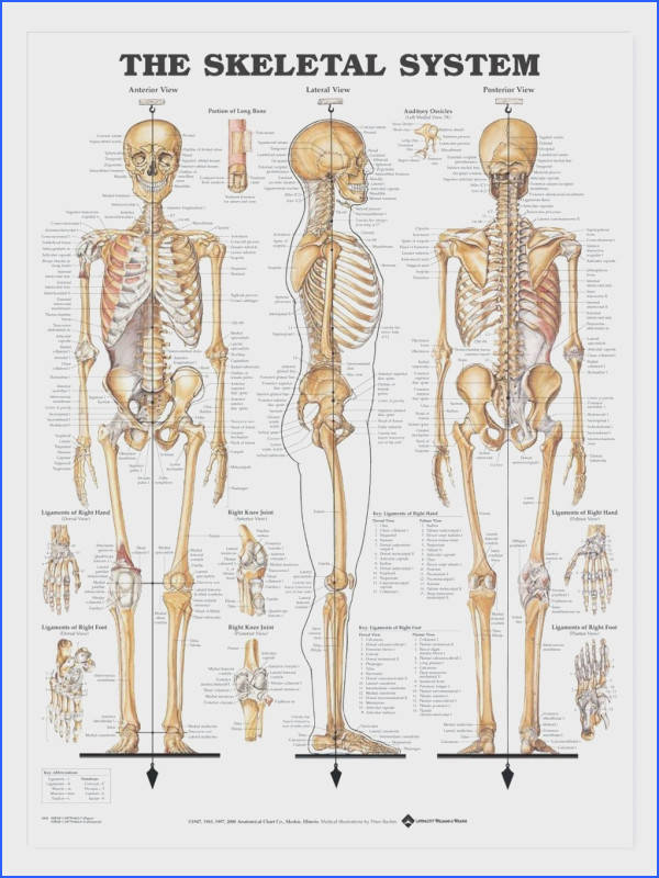 human anatomy of the human body contains many different systems here you will find School Pinterest