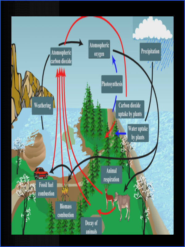 Respiration photosynthesis carbon oxygen cycle for kids