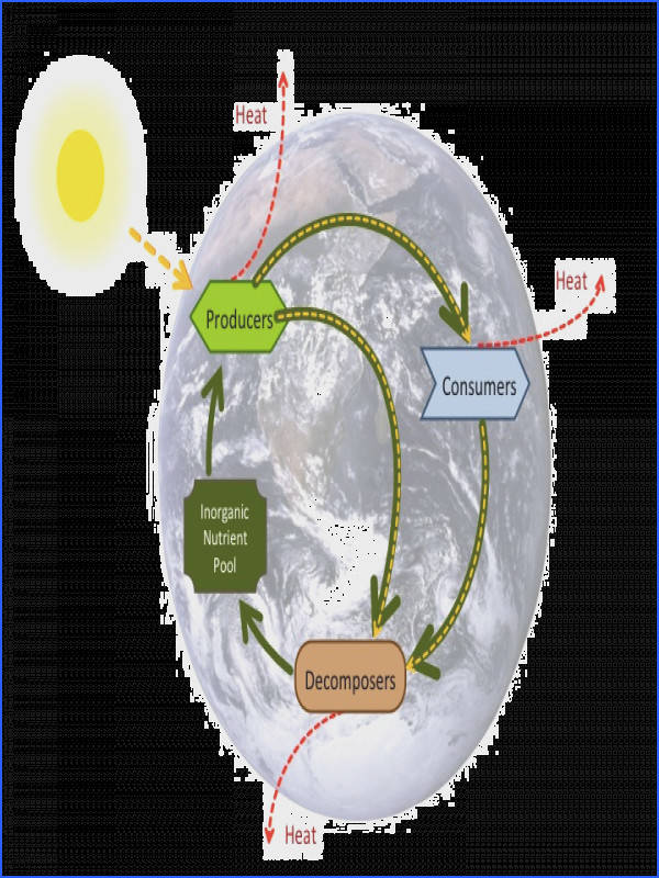 Which biogeochemical cycles are key to life