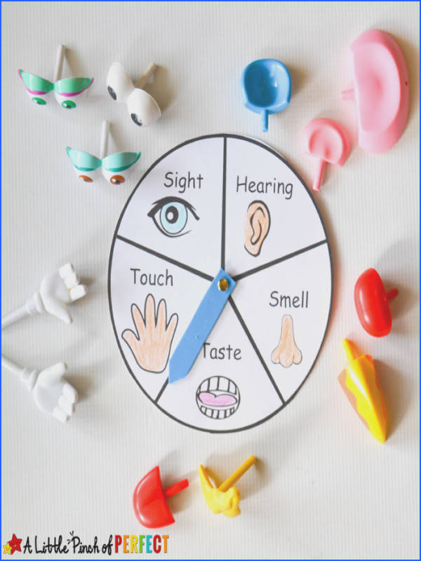 Learning about the 5 Senses Potato Head Game and Free Printable All you need is