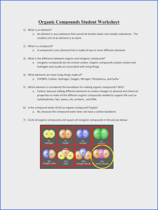 Macromolecules Worksheet What Atoms Make Up Carbohydrates Enzymes Are posed What Organic Molecule