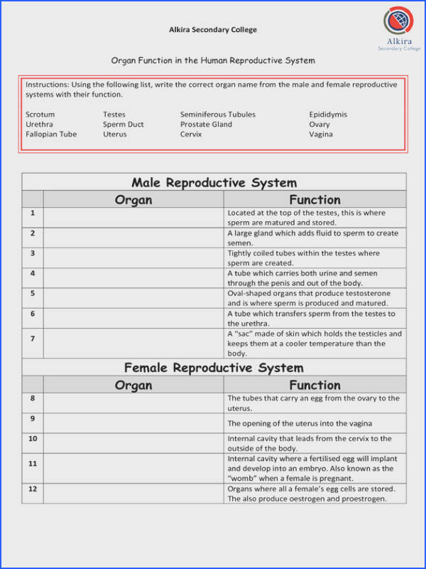 Male Reproductive System Anatomy medical terms Pinterest
