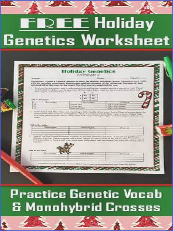 genetics middle school science Punnett squares worksheet monohybrid crosses heterozygous