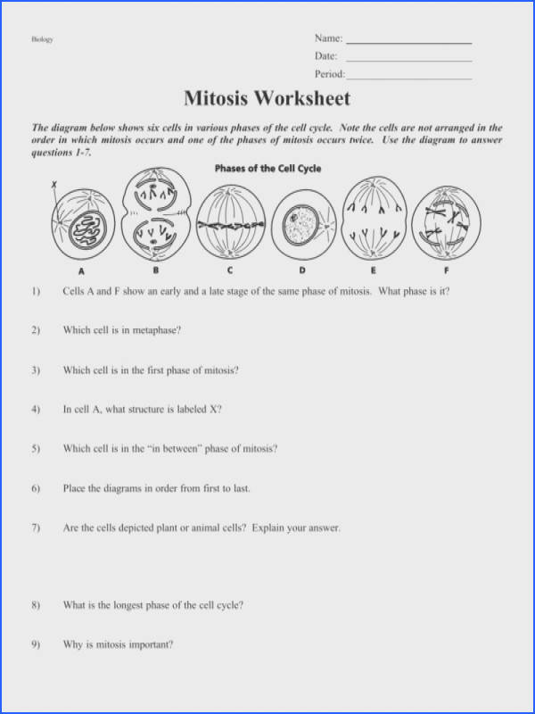 mitosis worksheet and diagram identification answer key switchconf