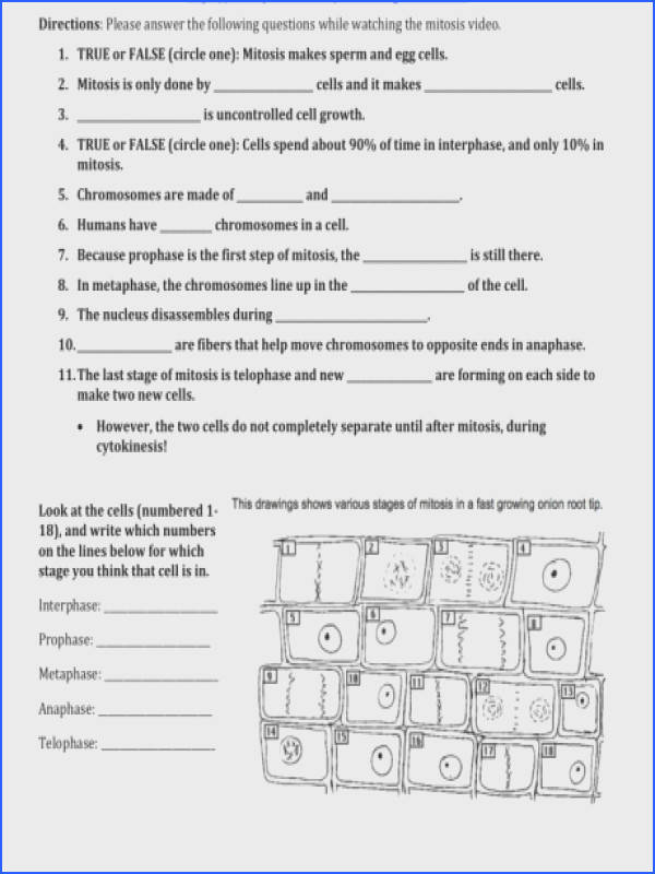 Mitosis Coloring Worksheet Answer Key All Grade Worksheets ion Cell Mitosis Worksheet Root Tip Answers