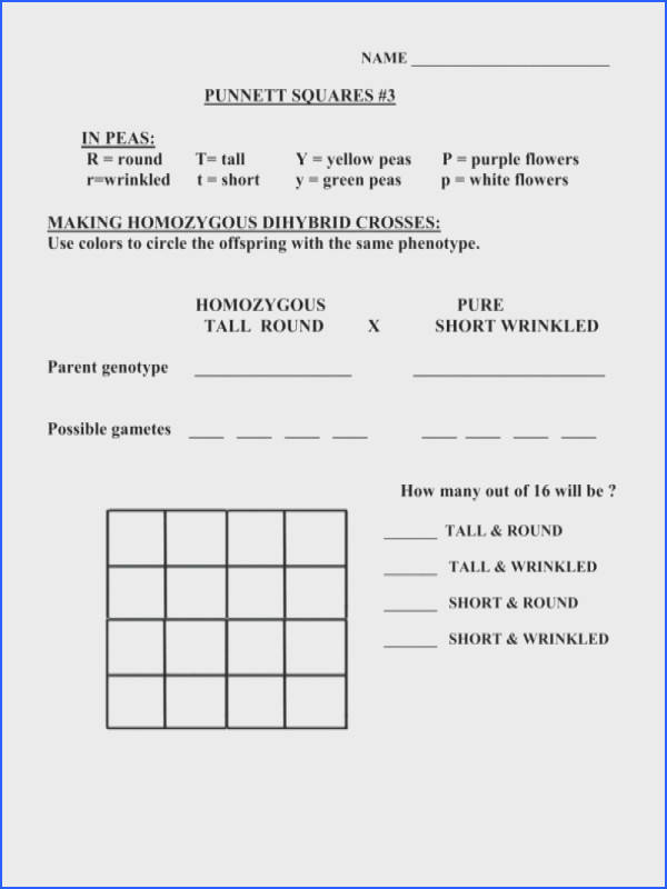 30 Monohybrid Crosses Practice Worksheet Answer Key ...