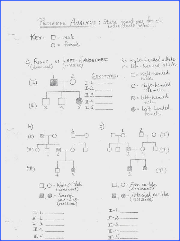 Chapter 10 Dihybrid Cross Worksheet Answer Key | Mychaume.com