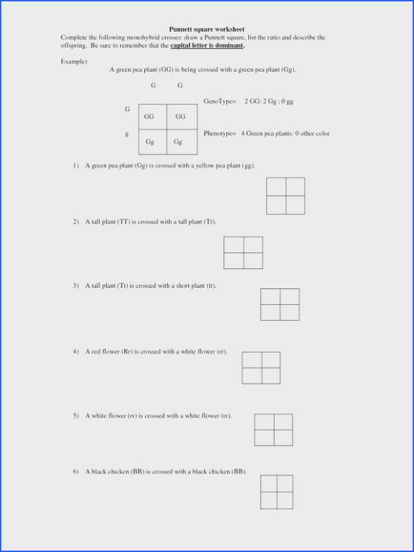 Monohybrid Cross Worksheet Key Checks Worksheet