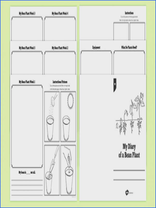 My Diary of a Bean Plant Booklet Template Bean growth plant life