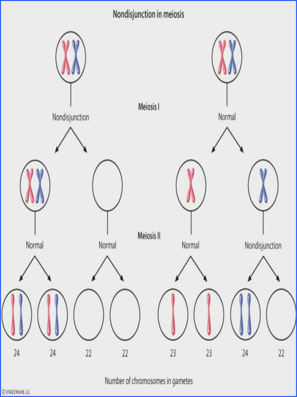 likewise Mitosis vs Meiosis Chart likewise Imagemgkl Mitosis And Meiosis Worksheet Middle   Mitosis Vs additionally Mitosis Vs Meiosis Worksheet Answers The best worksheets image additionally Meiosis Vocabulary Worksheet Answers   Free Printables Worksheet furthermore Solved  Mitosis Vs Meiosis Venn Diagram  Place Each Of The moreover Wanted  Your Undivided Attention  Mitosis vs  Meiosis In this lesson further Mitosis Vs Meiosis Worksheet Answer Key 153 Best Mitosis   Meiosis besides Mitosis vs  Meiosis Worksheet Worksheet   Hot Resources for November moreover Mitosis vs  Meiosis Worksheet Worksheet   Hot Resources for November also Diagram Of Mitosi   mitosis phases diagram air american samoa also Mitosis Foldable also Mitosis Vs Meiosis Worksheet   Mychaume further Meiosis Worksheet Answers Luxury Mitosis Vs Meiosis Worksheet as well Mitosis vs Meiosis Match Up by Katrina Lindroos   TpT in addition New Mitosis Worksheet Fresh Cell Clip Art Cytokinesis on Mitosis Vs. on mitosis vs meiosis worksheet answers