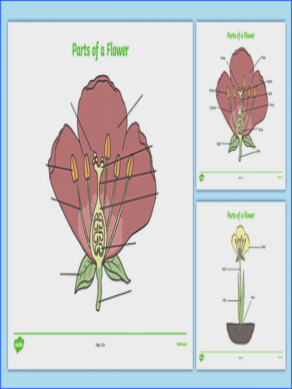 Parts of a Plant and Flower Labelling Worksheet Plant Diagram