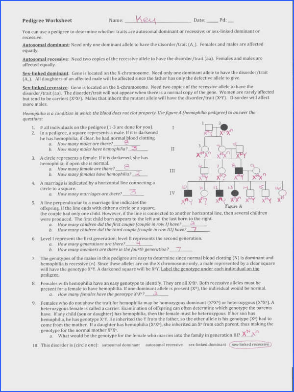 pedigree worksheet answers pedigree worksheet answers to pedigree worksheet books worth