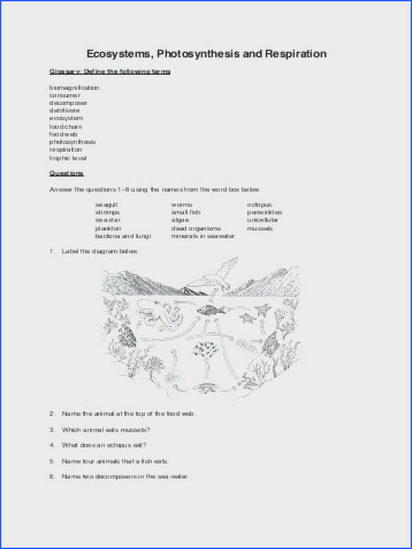 photosynthesis worksheet high school as well as ecosystems photosynthesis and respiration worksheet booklet amazing photosynthesis lesson