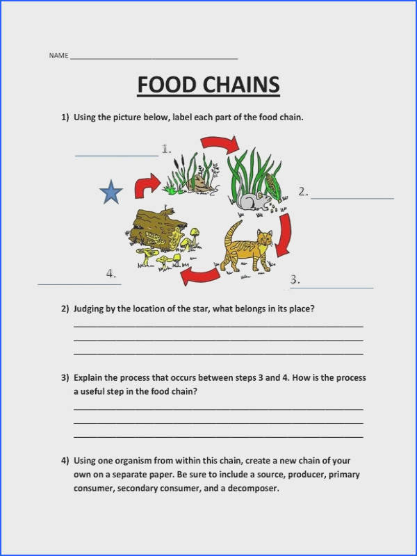 Food chain worksheet mychaume picture worksheets pinterest from food chain worksheet source pinterest ibookread Download