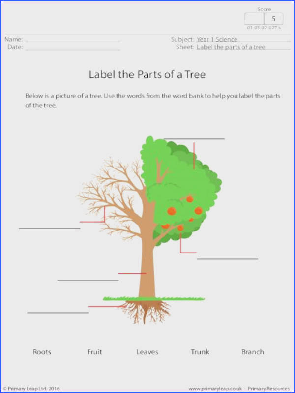 PrimaryLeap Label the Parts of a Tree Worksheet