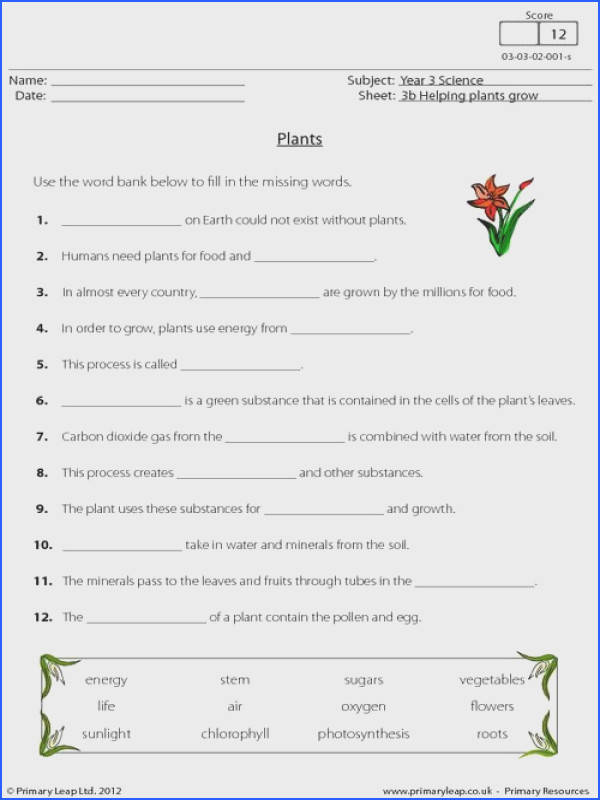 This worksheet describes the process of photosynthesis