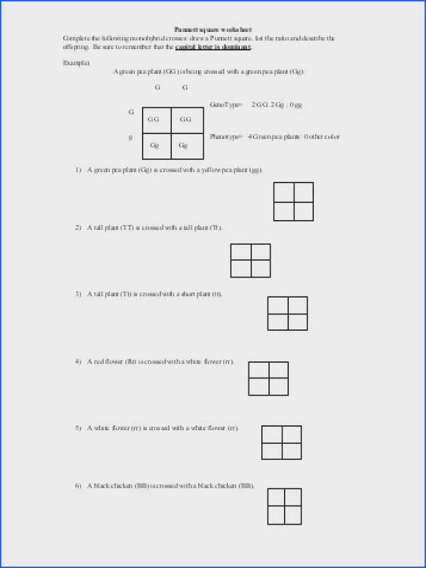 Punnett Square Worksheet 1 Answer Key Switchconf