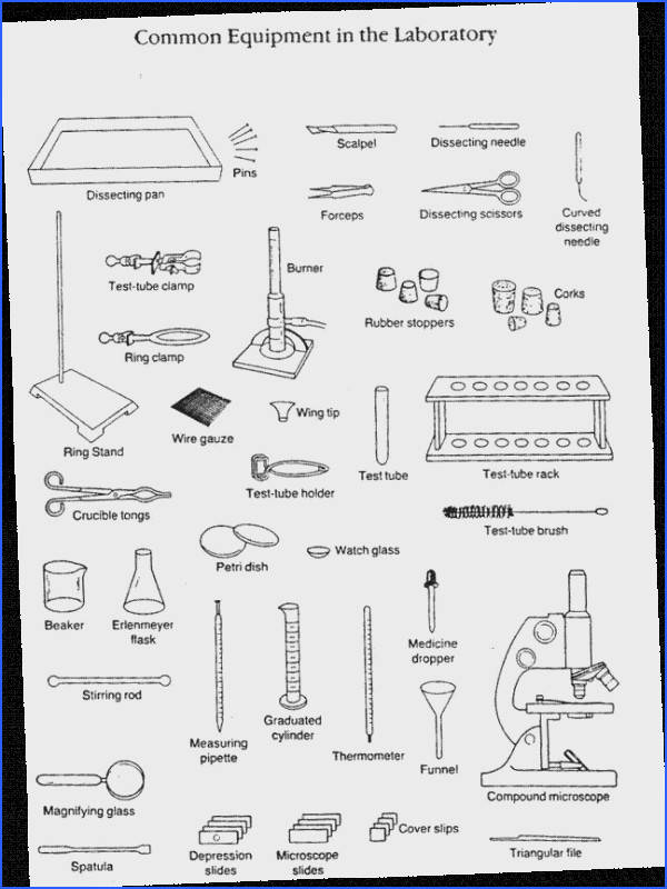 Science Tools Worksheet 4Th Grade
