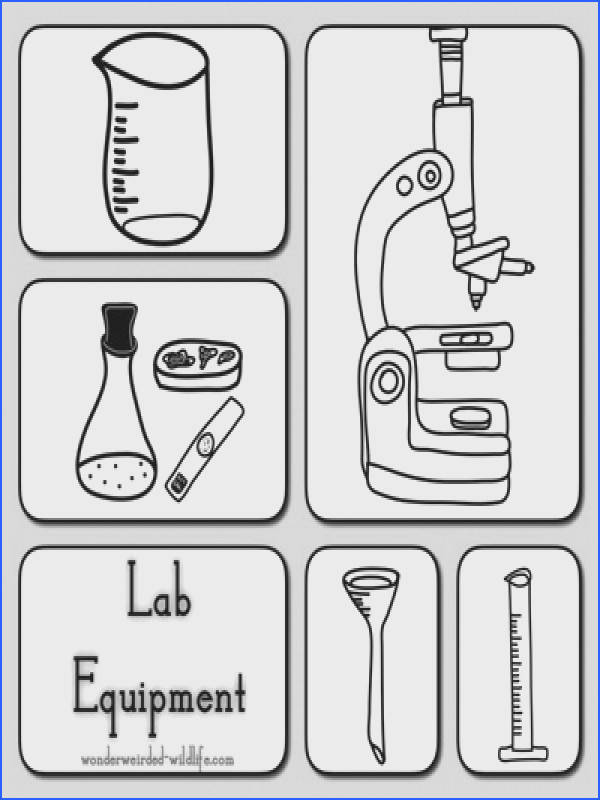 science worksheet science lab tools clipart