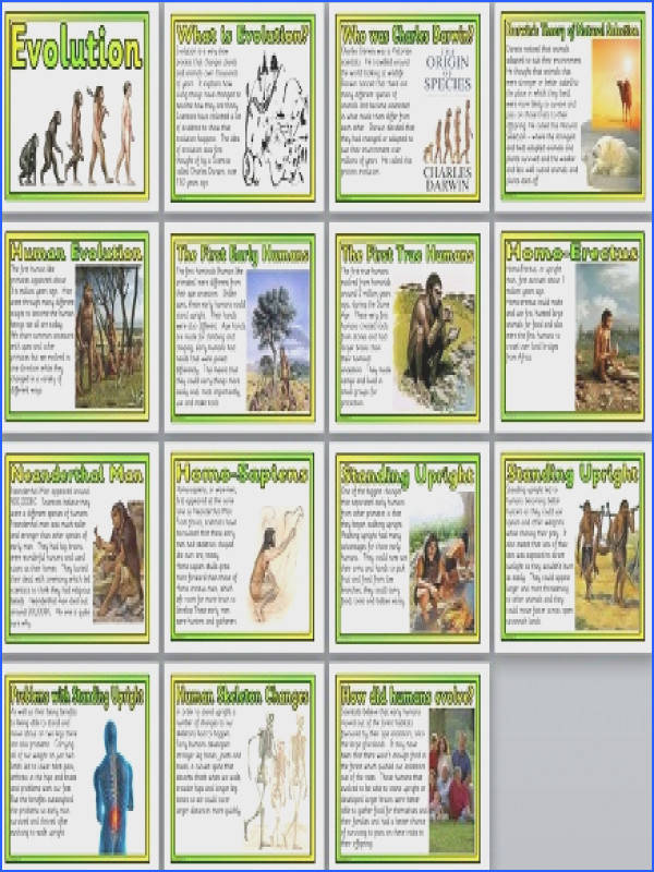 Set of 15 printable posters that look at human evolution Includes Title Page