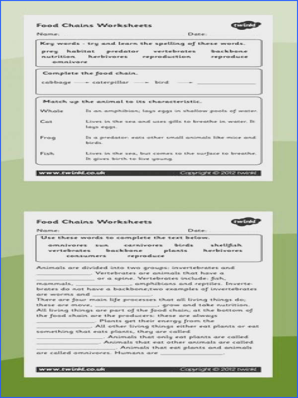 Food chains Food chain worksheets