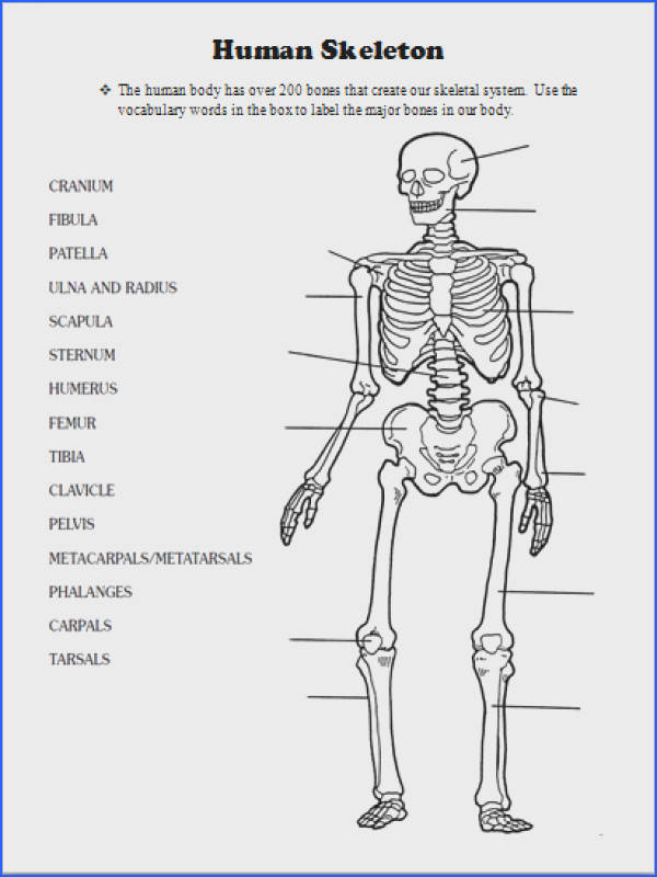 Human Body Skeletal System Lesson