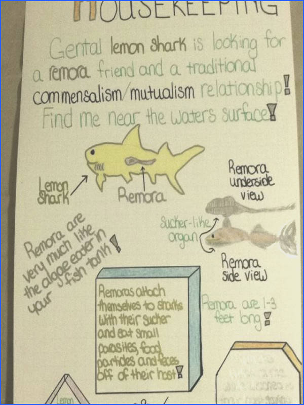 Symbiotic Relationships Wanted Ad Project 7th grade students choose a symbiotic relationship out of