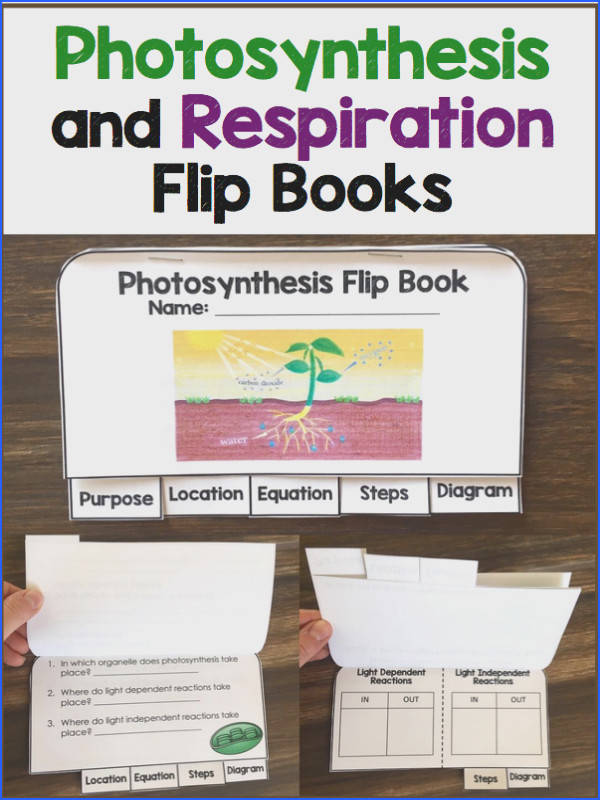 synthesis and cellular respiration flip books Great for interactive notebooks