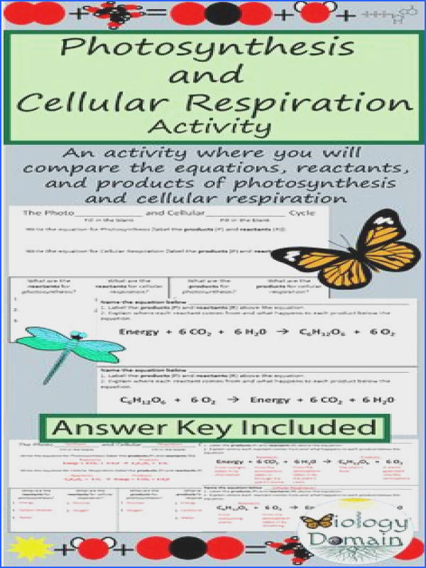 synthesis and Cellular Respiration parison with Answer Key