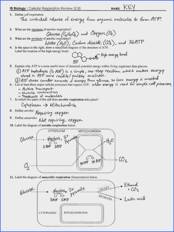 Photosynthesis And Cellular Respiration Worksheet Mychaume