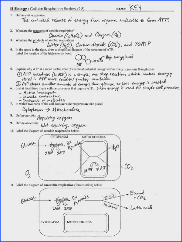 Photosynthesis And Respiration Worksheet Answers Mychaume