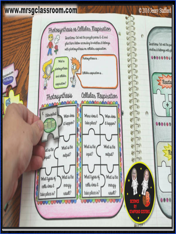 synthesis VS Cellular Respiration Puzzle SCIENCE Interactive Notebook on CELLS Visit