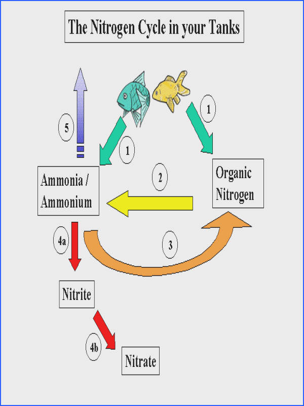 nitrogen cycle worksheet worksheets for all and share