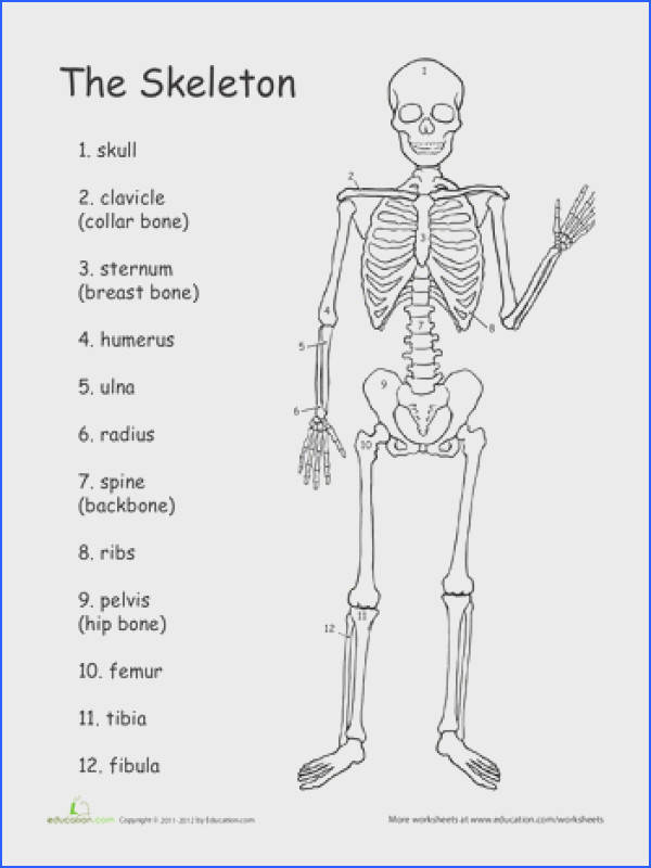 The skeleton Worksheet Hoja de trabajo del esqueleto