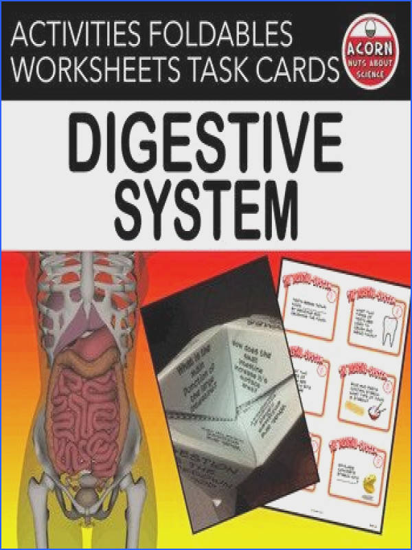 This Digestive System unit is packed with activities diagrams foldables worksheets digestive system task cards and more on the digestive system…
